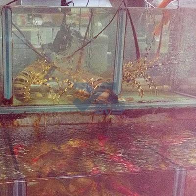 活海鮮餐廳魚缸訂做